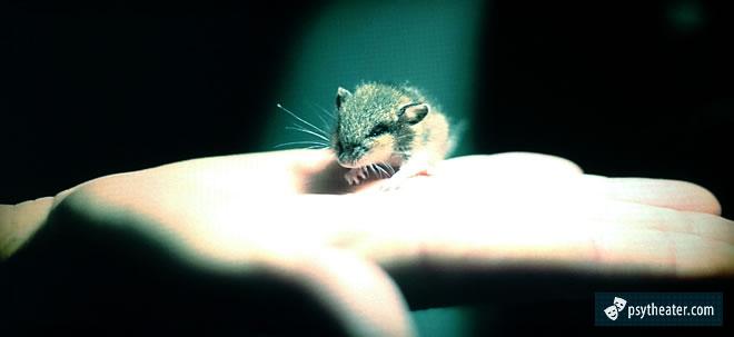 Мыши могут избавить от аутизма